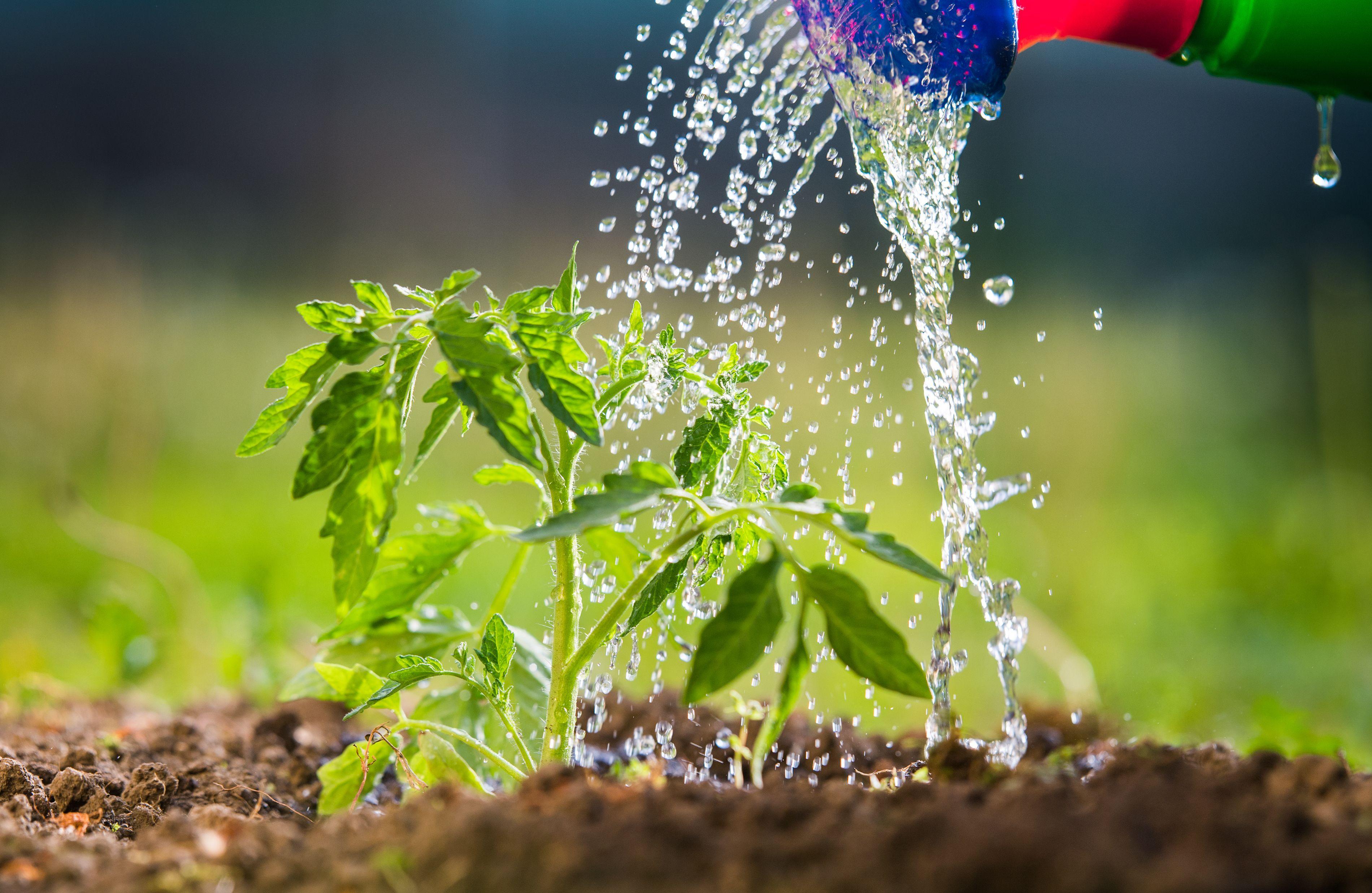 Come innaffiare l'orto