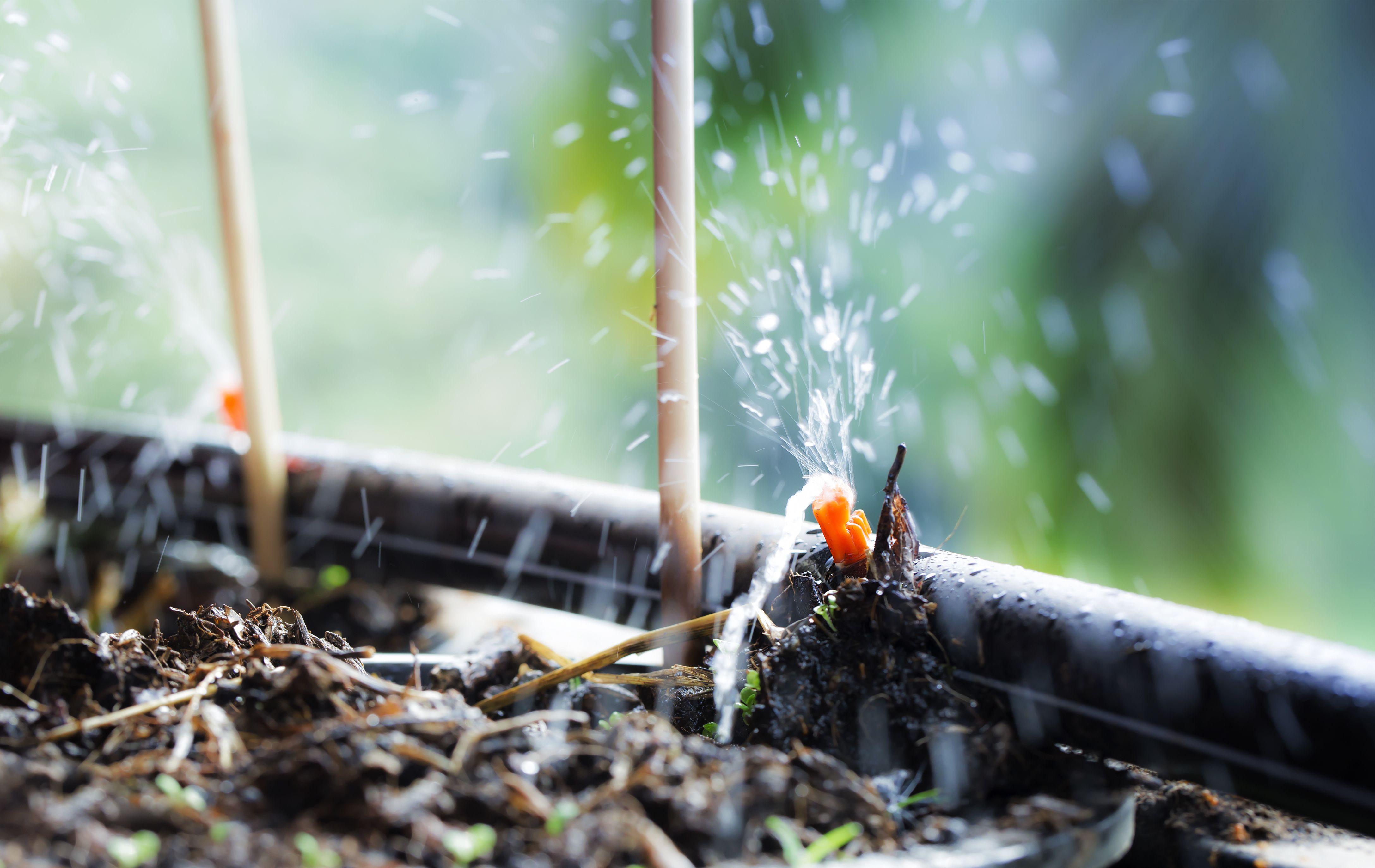 Come scegliere un sistema di irrigazione a goccia