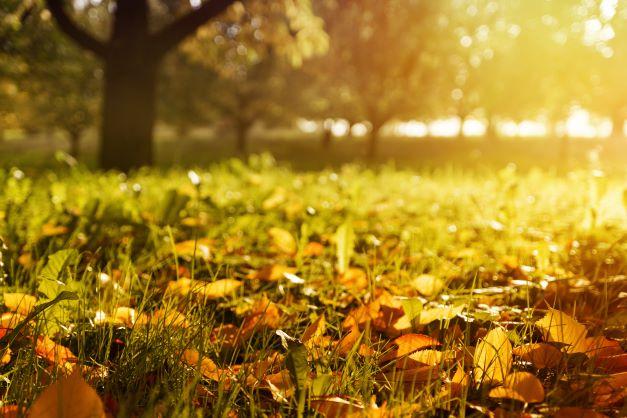 Settembre: la guida completa per la casa e il giardino