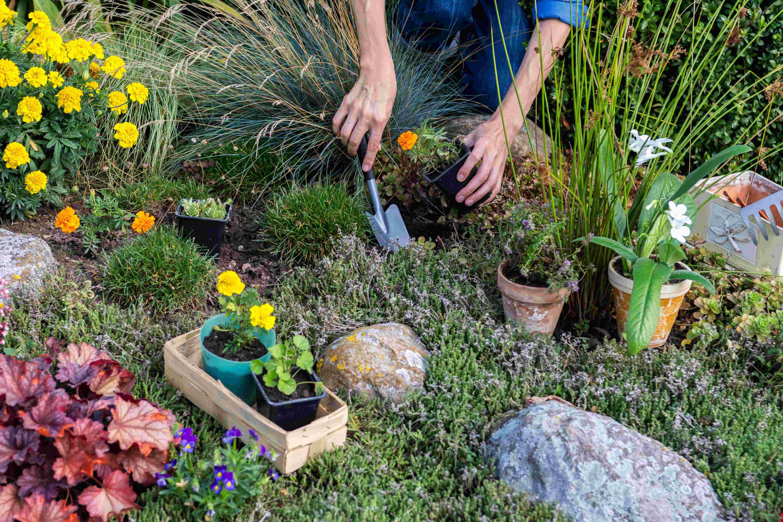 Cómo elegir plantas de rocalla