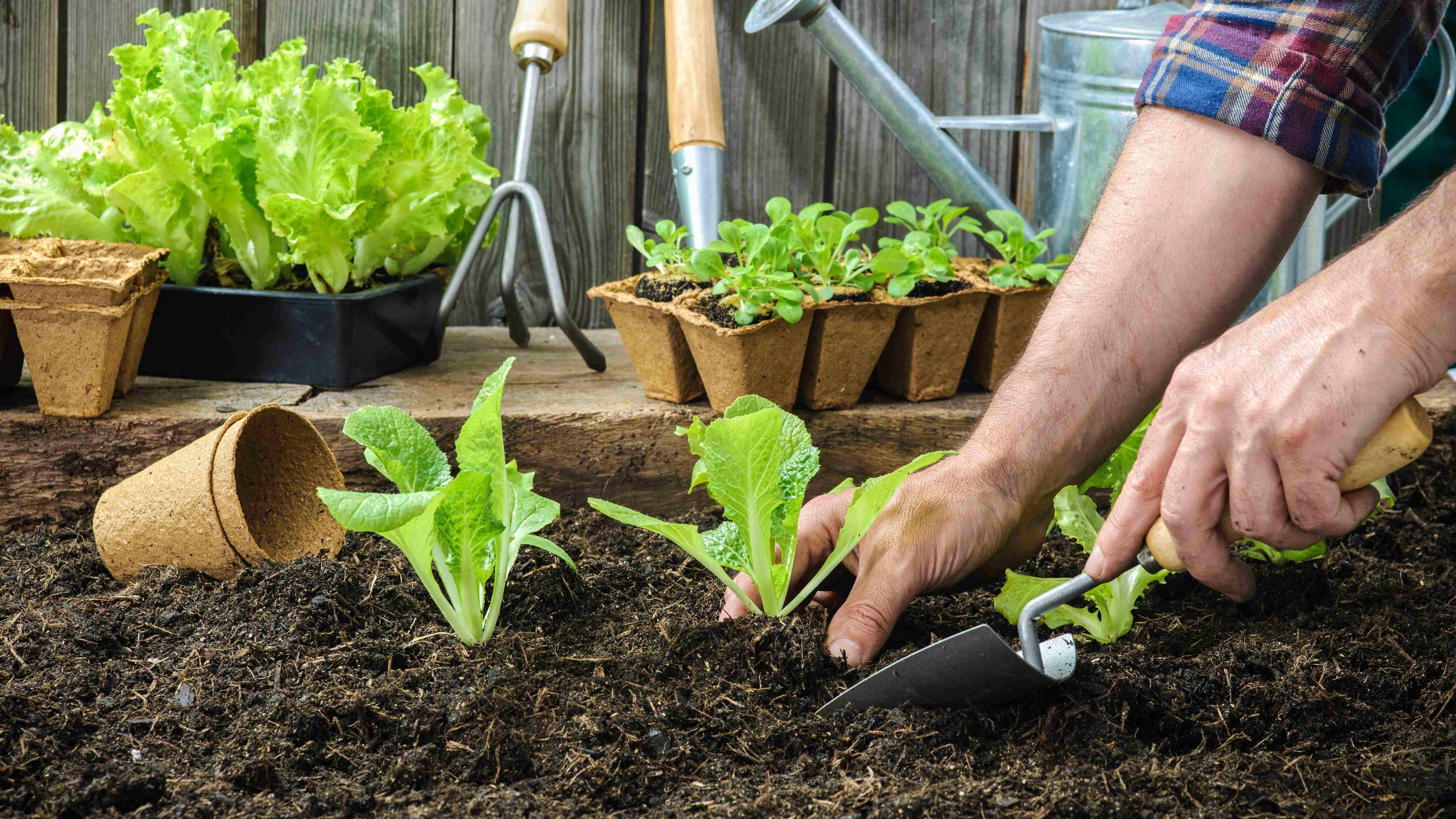 Qué verduras y hortalizas plantar en marzo