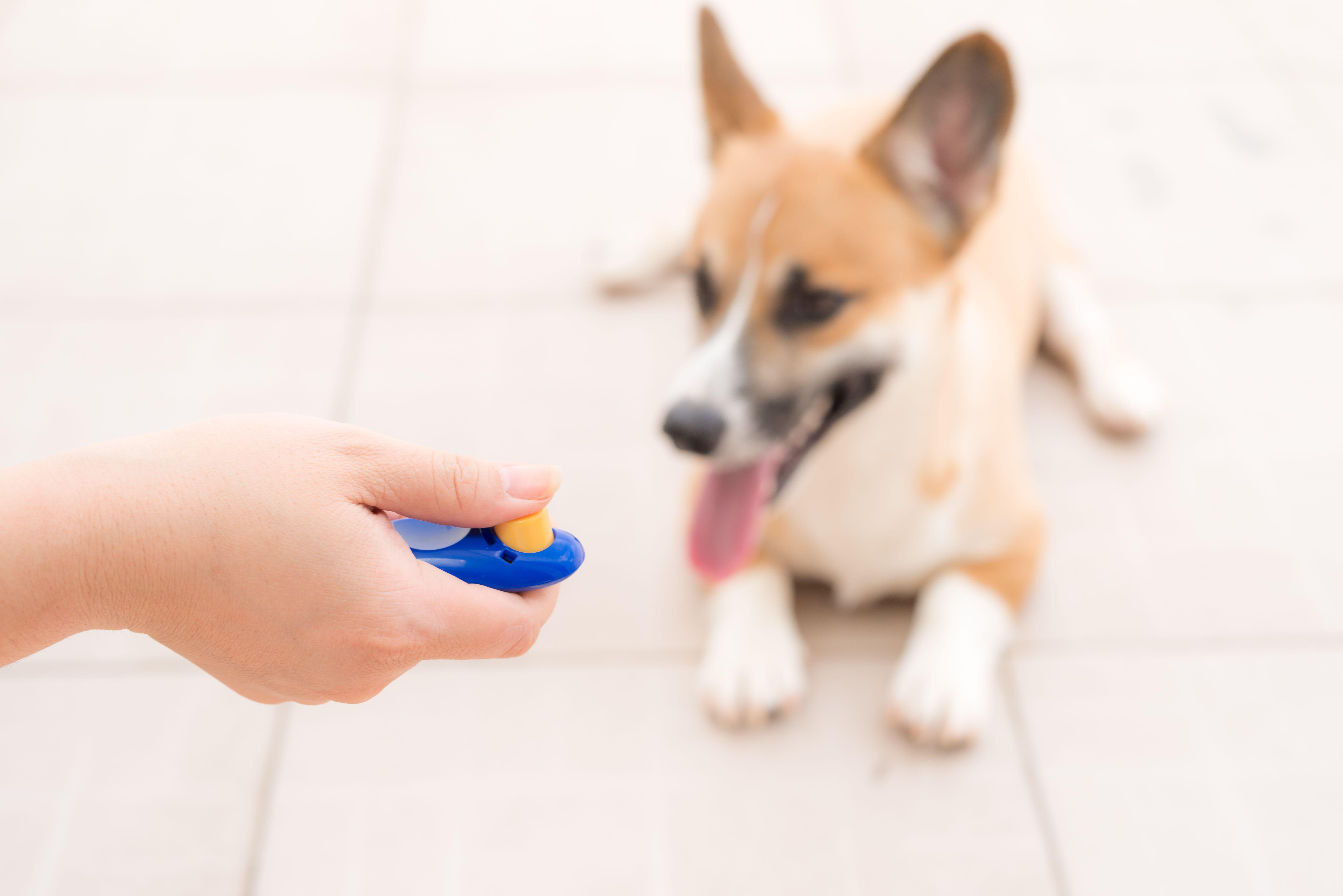 Clicker et sifflet pour chien : comment choisir