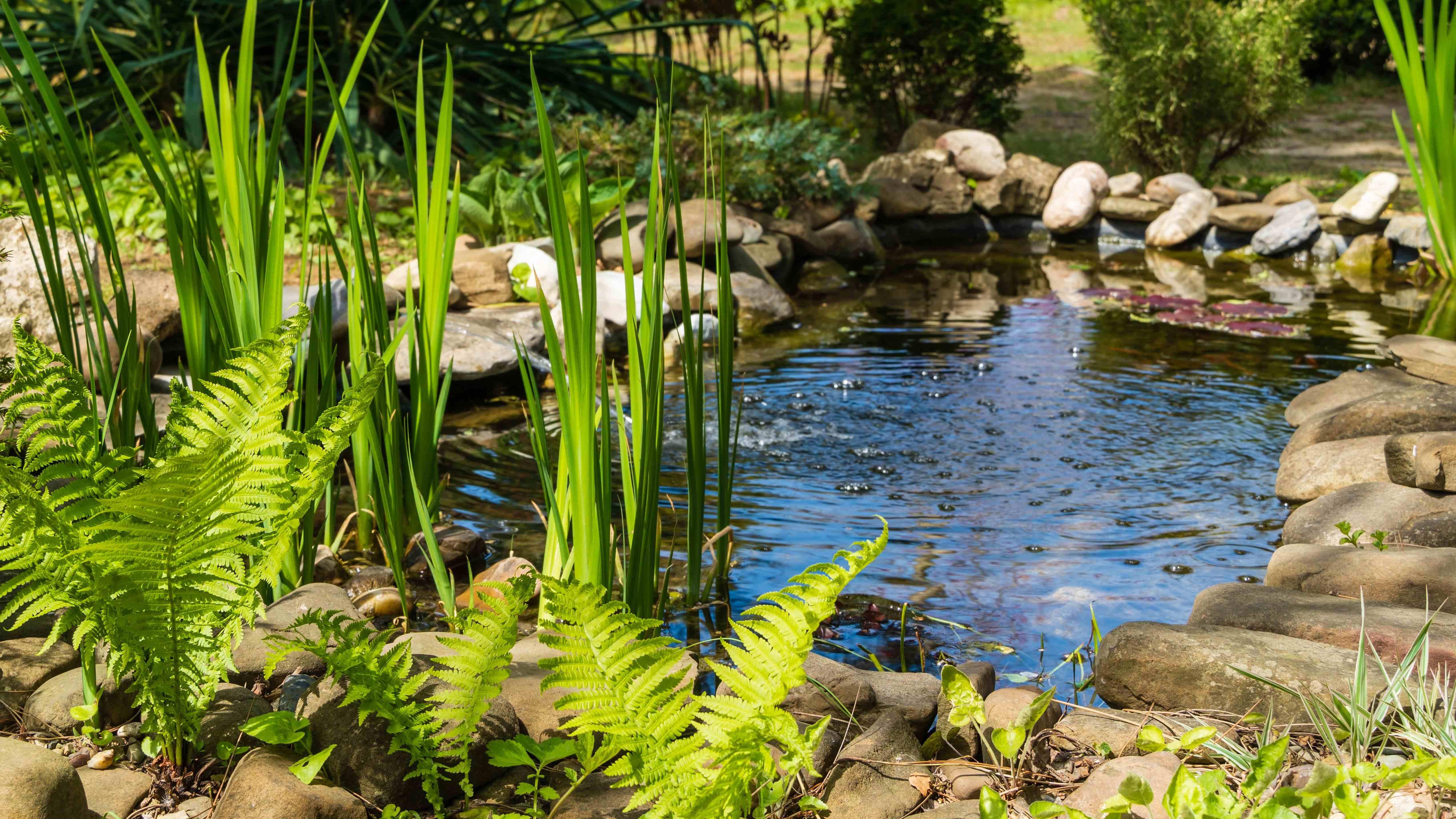 Cómo elegir un estanque para el jardín