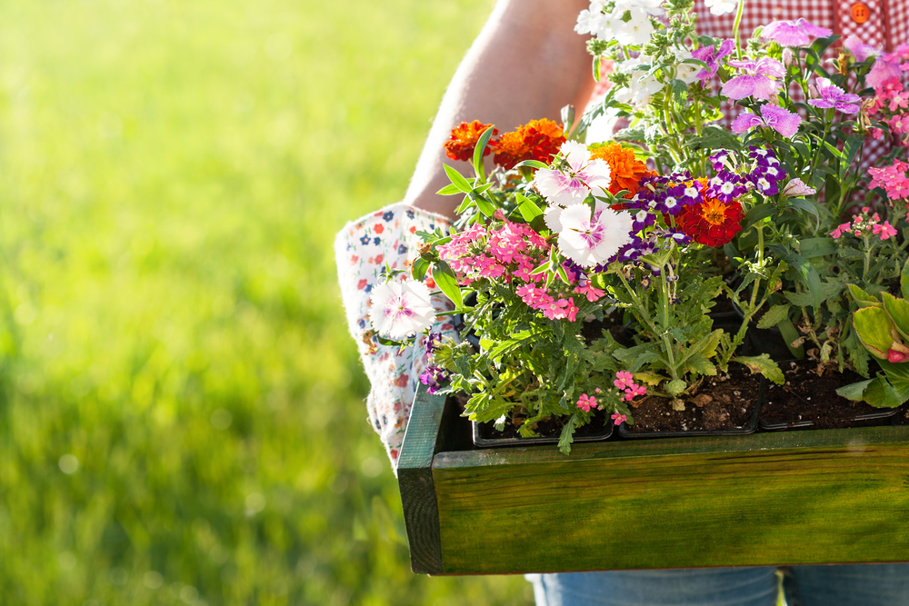Flowers to plant and sow in May