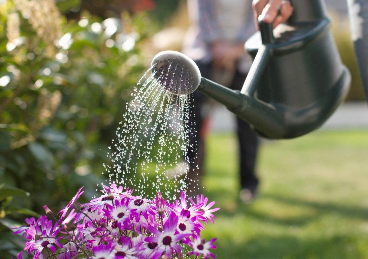 Cómo elegir el sistema de riego de tu jardín