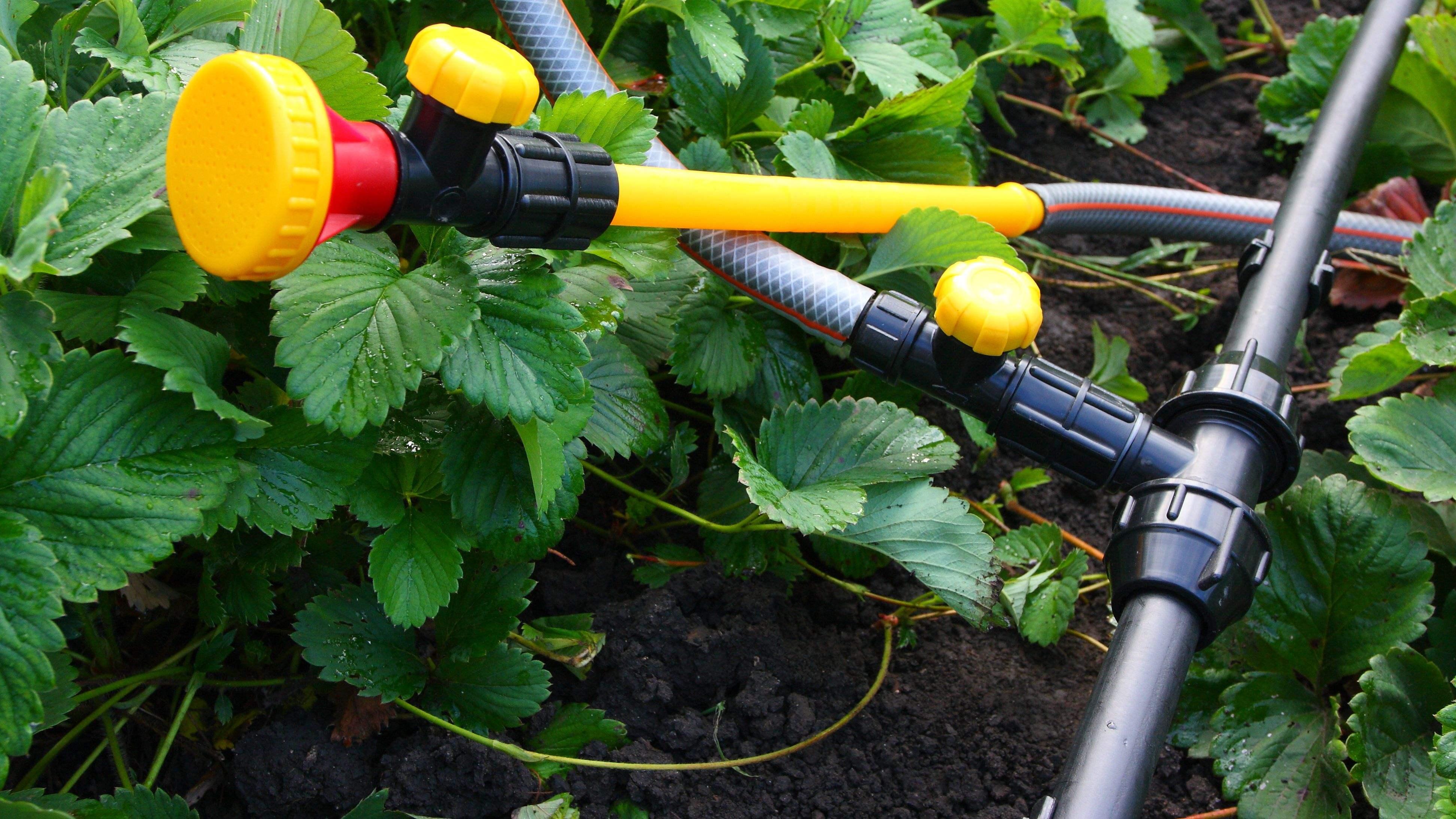 Come scegliere l'irrigazione interrata