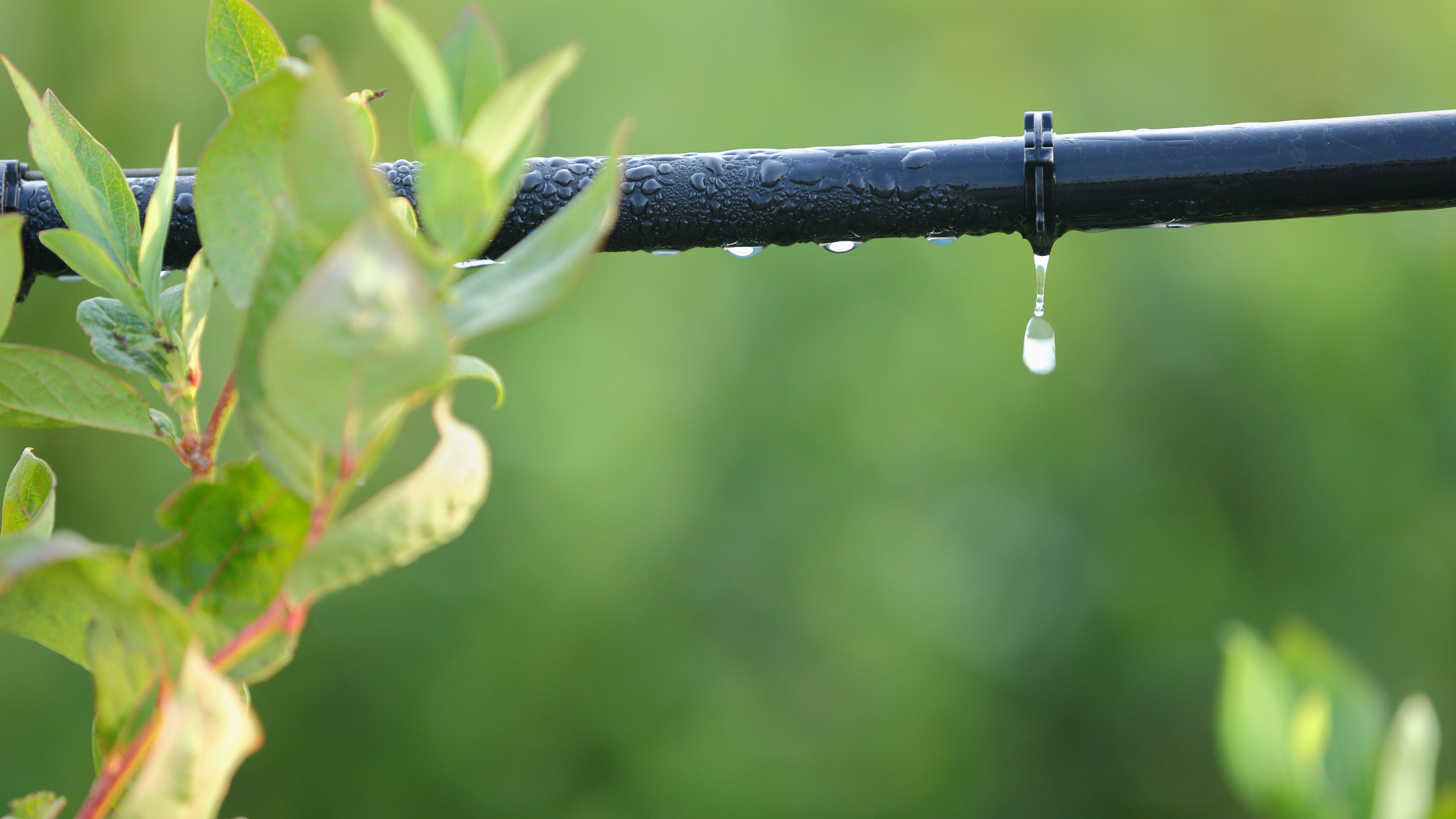 Come installare un impianto di irrigazione a goccia