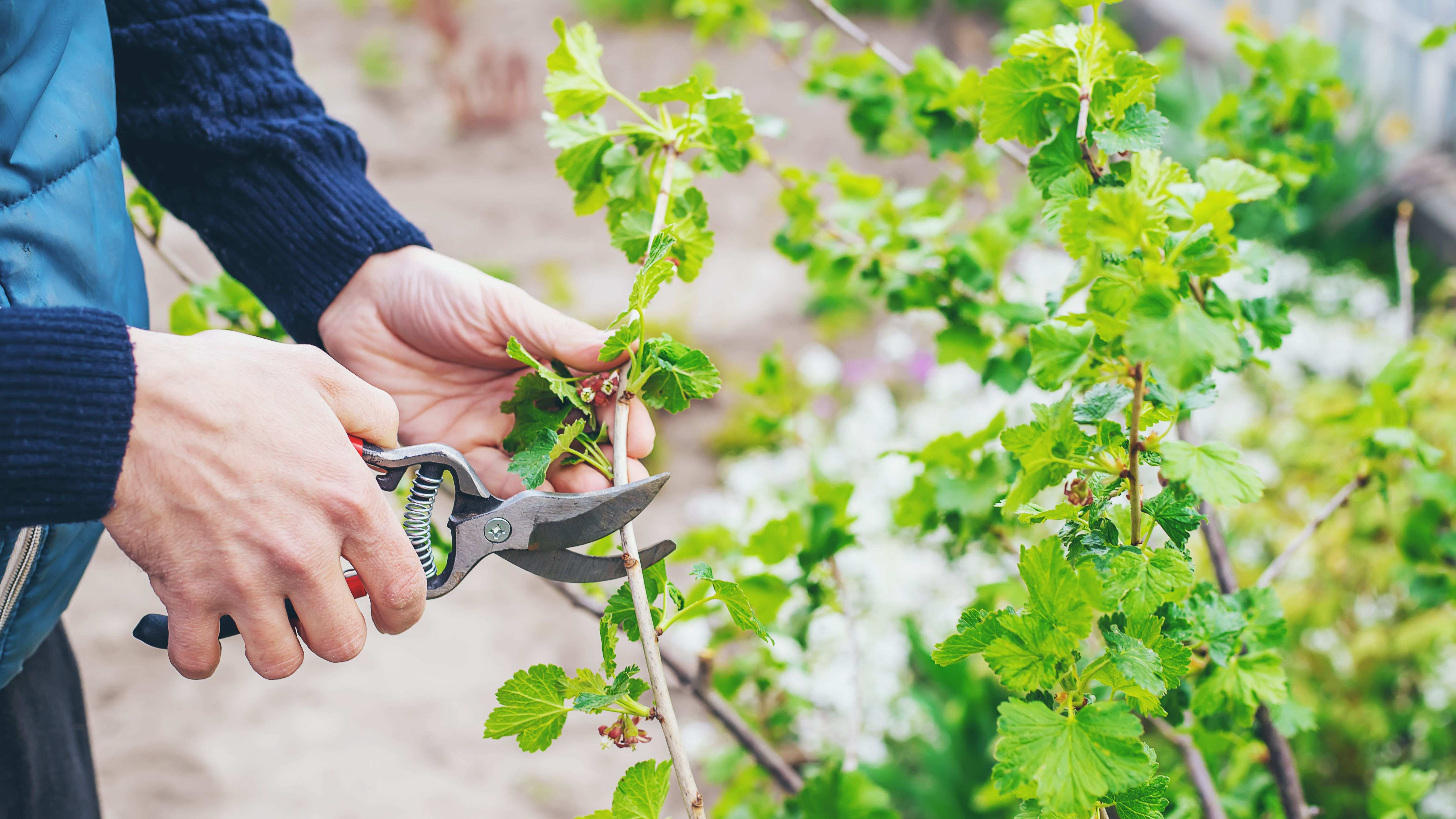 How to prune your trees and shrubs