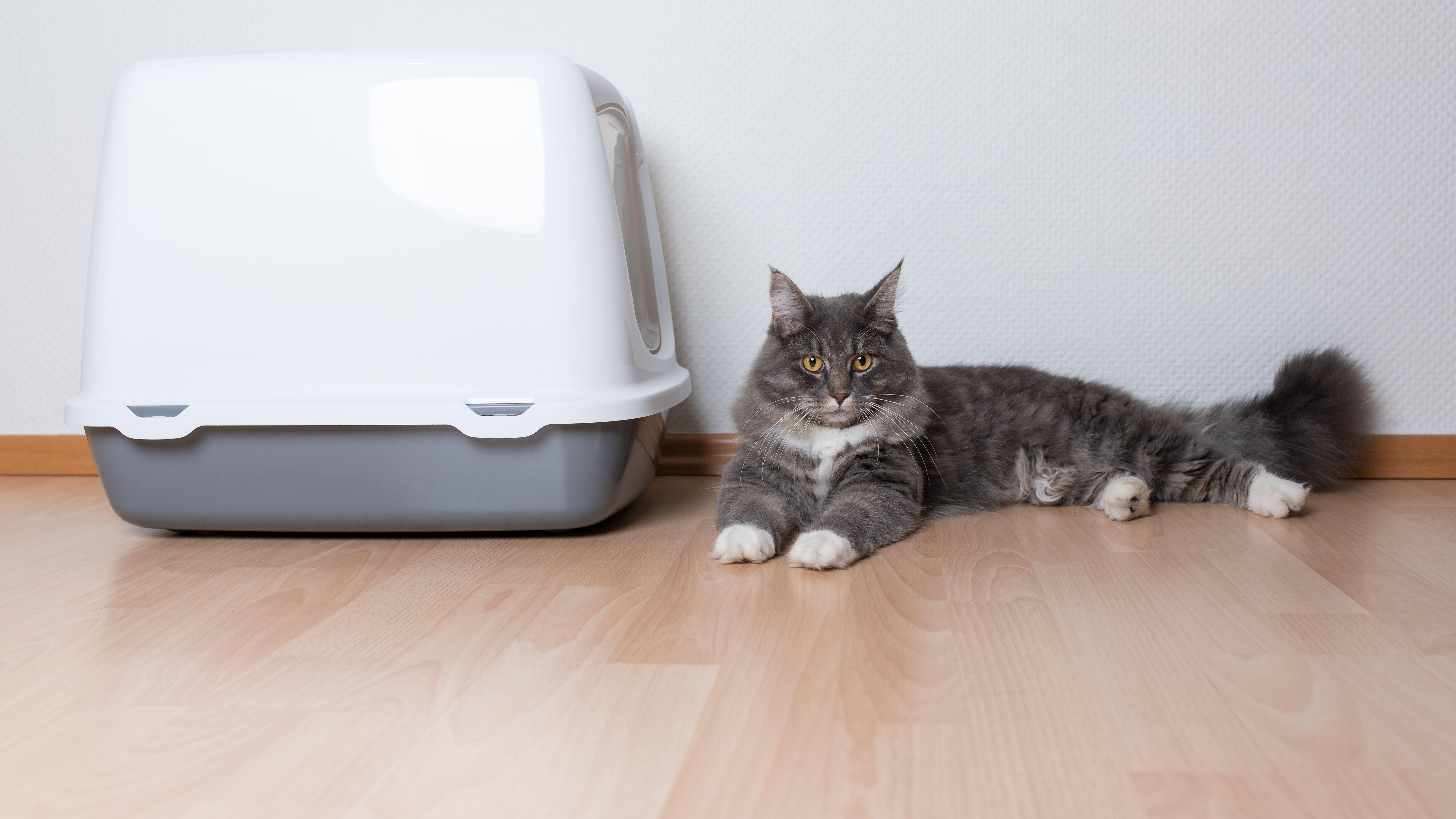 Maison de toilette pour chat et bac à litière :  comment choisir