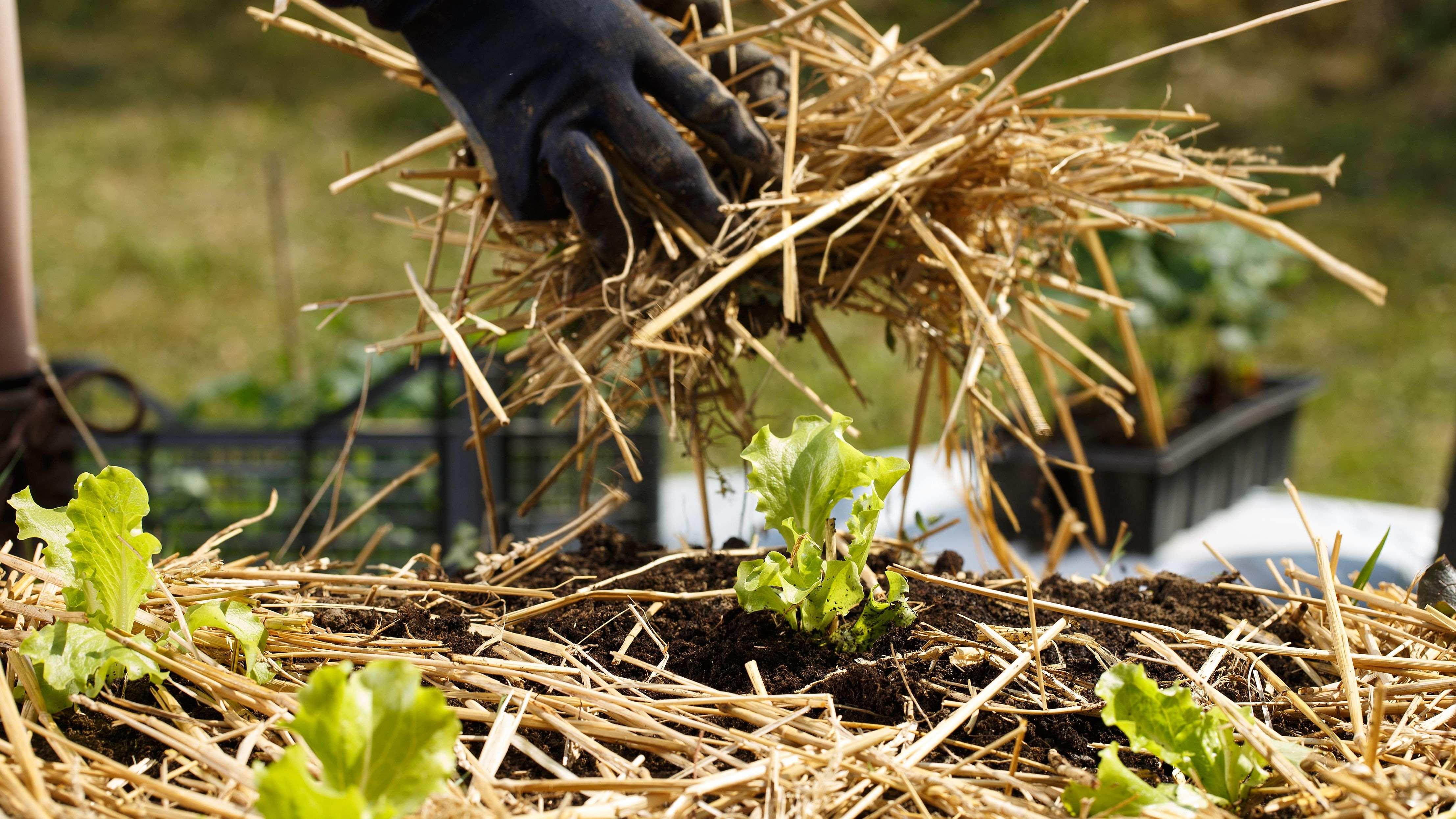 Cómo elegir el acolchado para tus cultivos