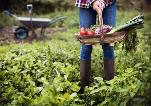 Coltivare un orto: la guida completa