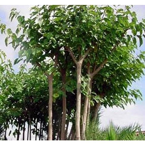 Cuidados de los árboles en verano