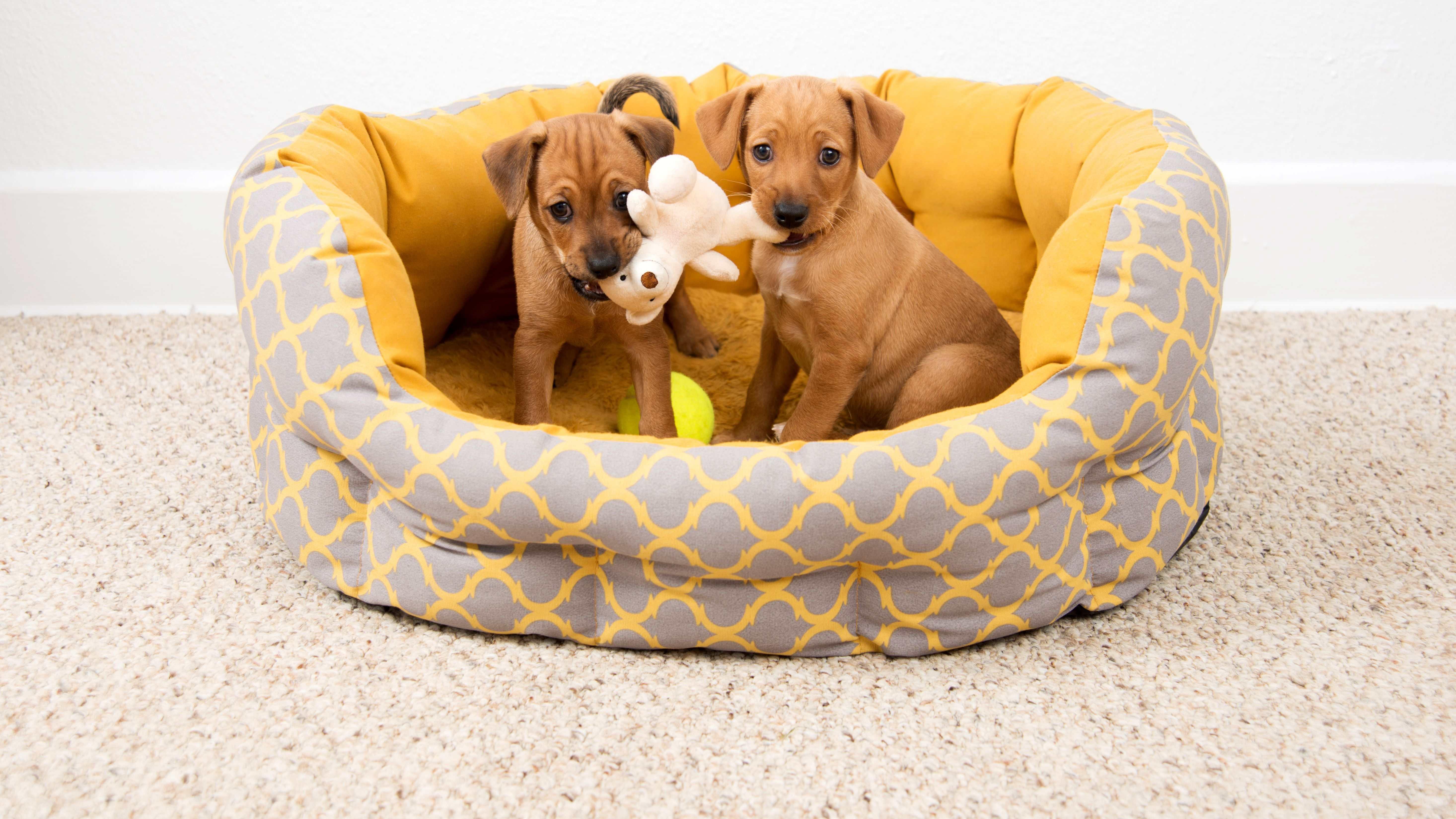Die richtige Auswahl eines Korbs oder Teppichs als Hundeschlafplatz