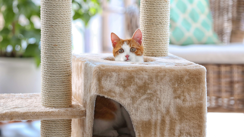 So finden Sie den richtigen Kratzbaum für Ihre Katze