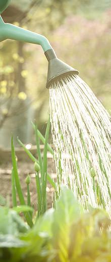 Come scegliere un annaffiatoio o un irrigatore