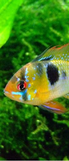 Comment choisir un éclairage d'un aquarium ?