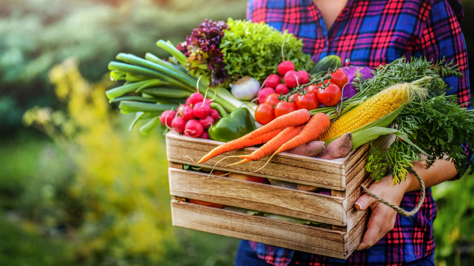 Calendario delle semine e della messa a dimora dei principali ortaggi