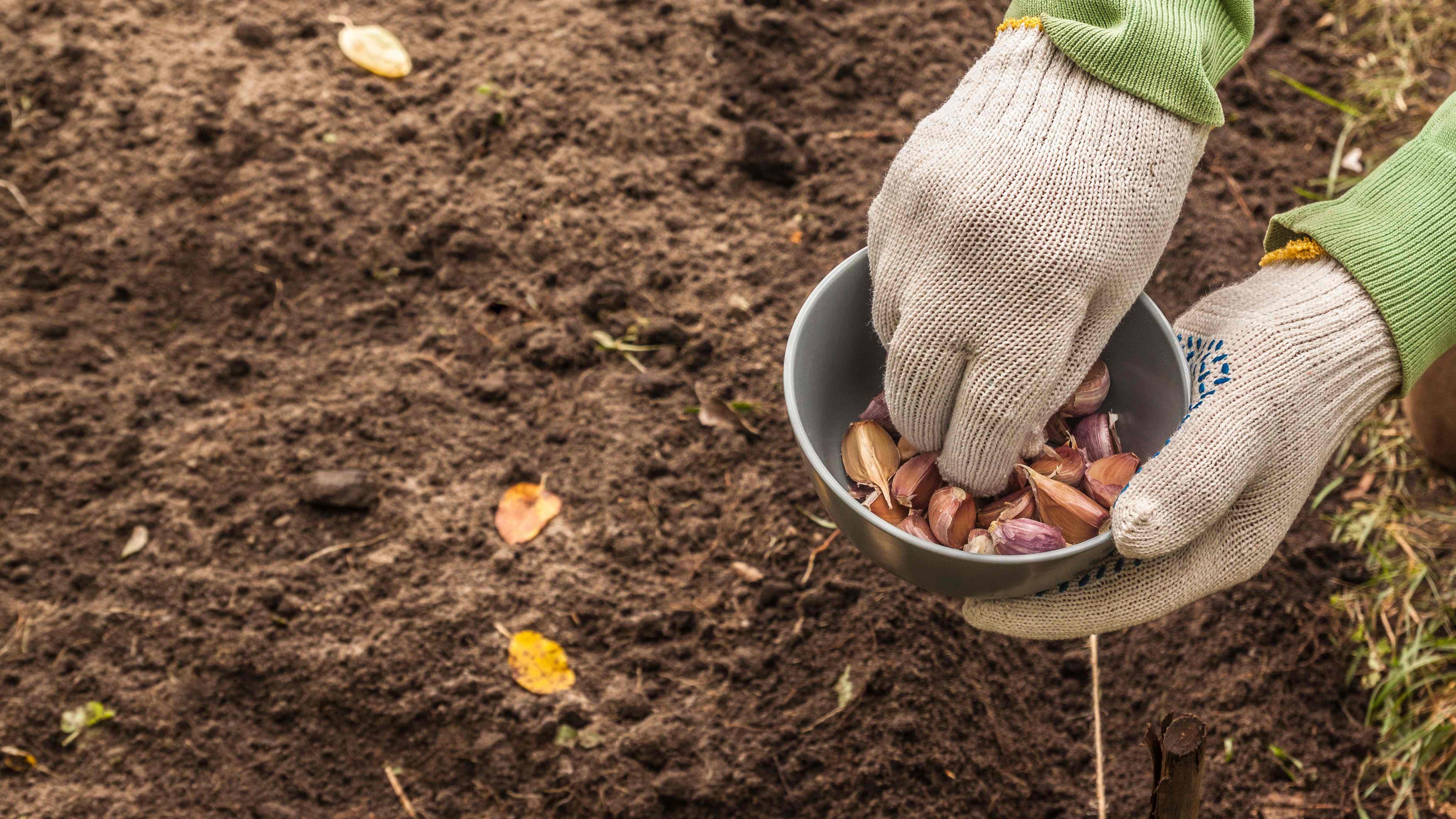 Cosa piantare  in novembre