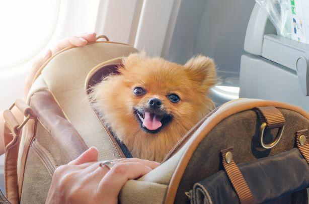 Trasportini per cani e gatti: norme IATA per trasporto aereo