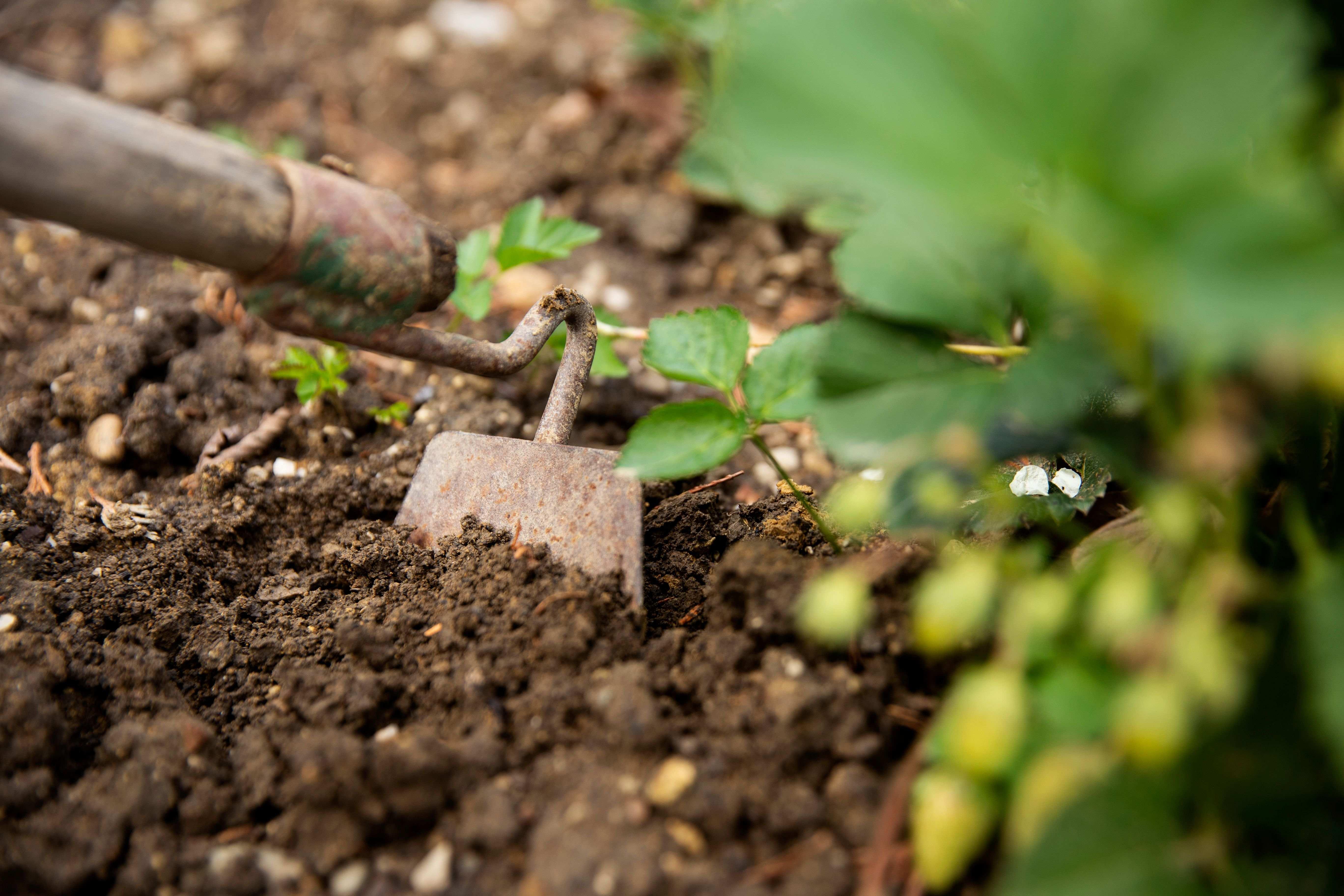 Come diserbare il giardino