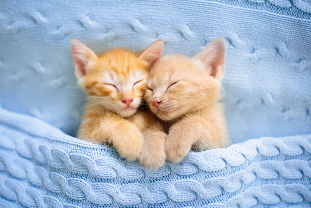 How to prepare for a new kitten