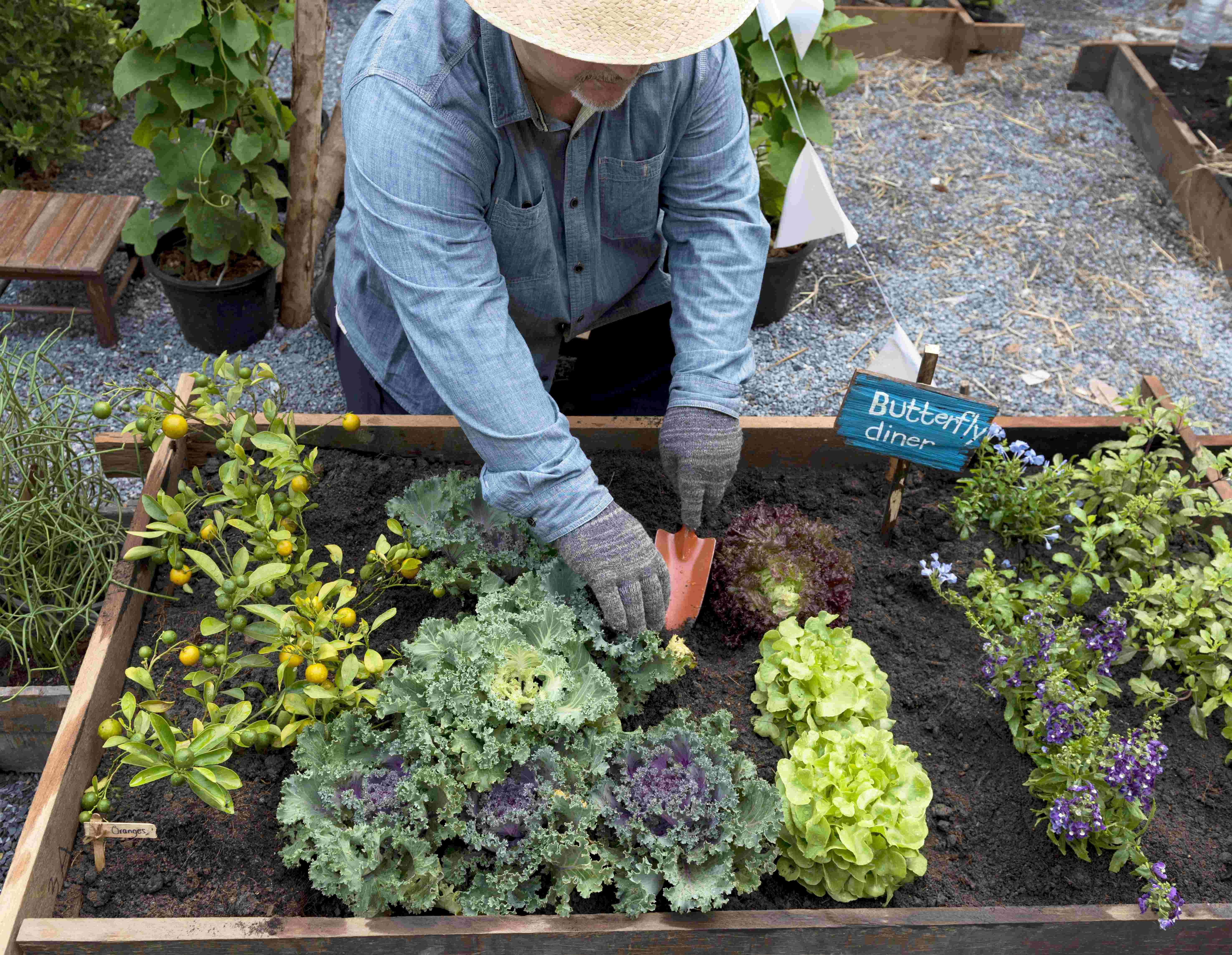 Débuter un jardin  en permaculture