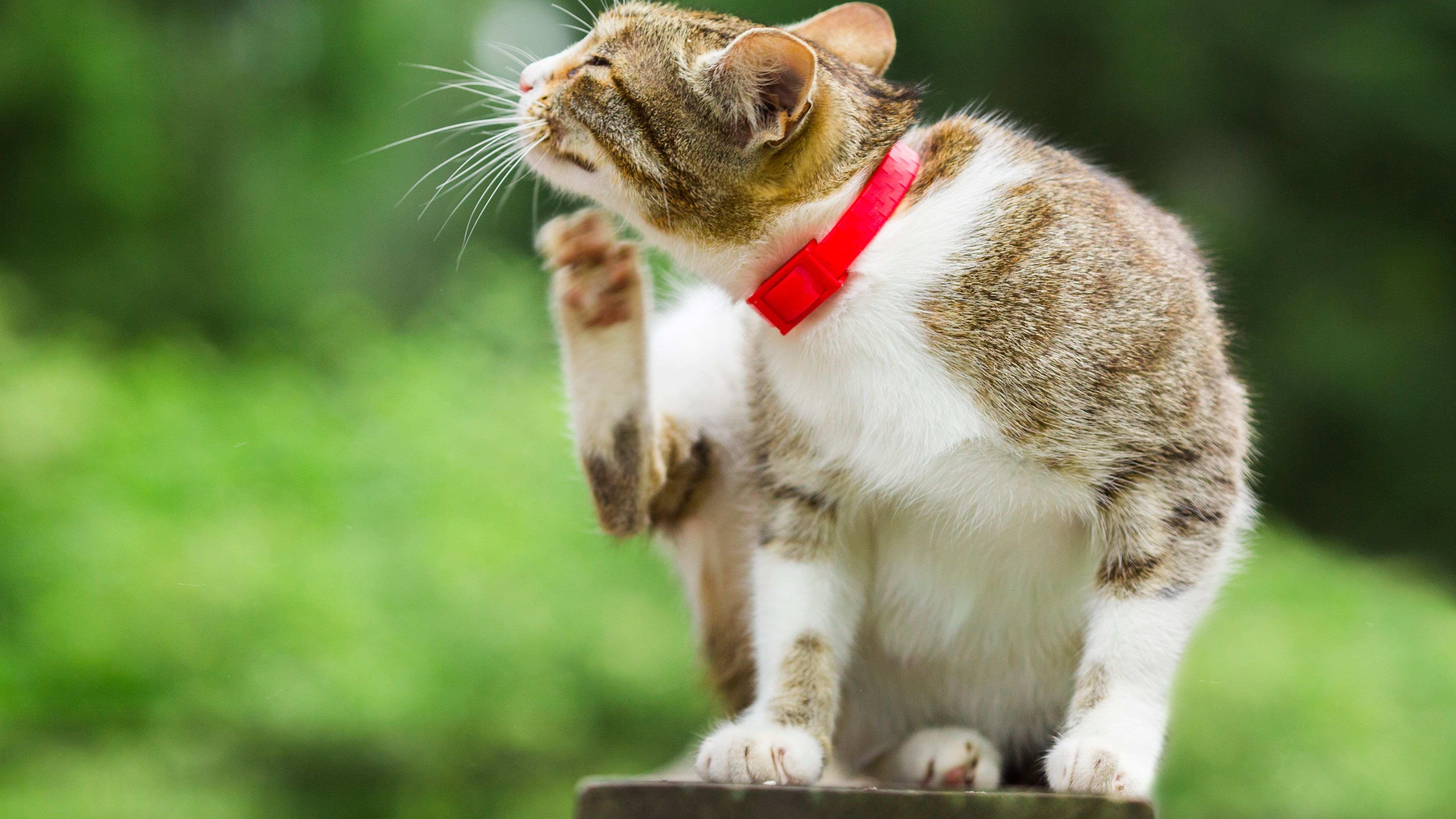 ¿Cómo elegir antiparasitarios para gatos?
