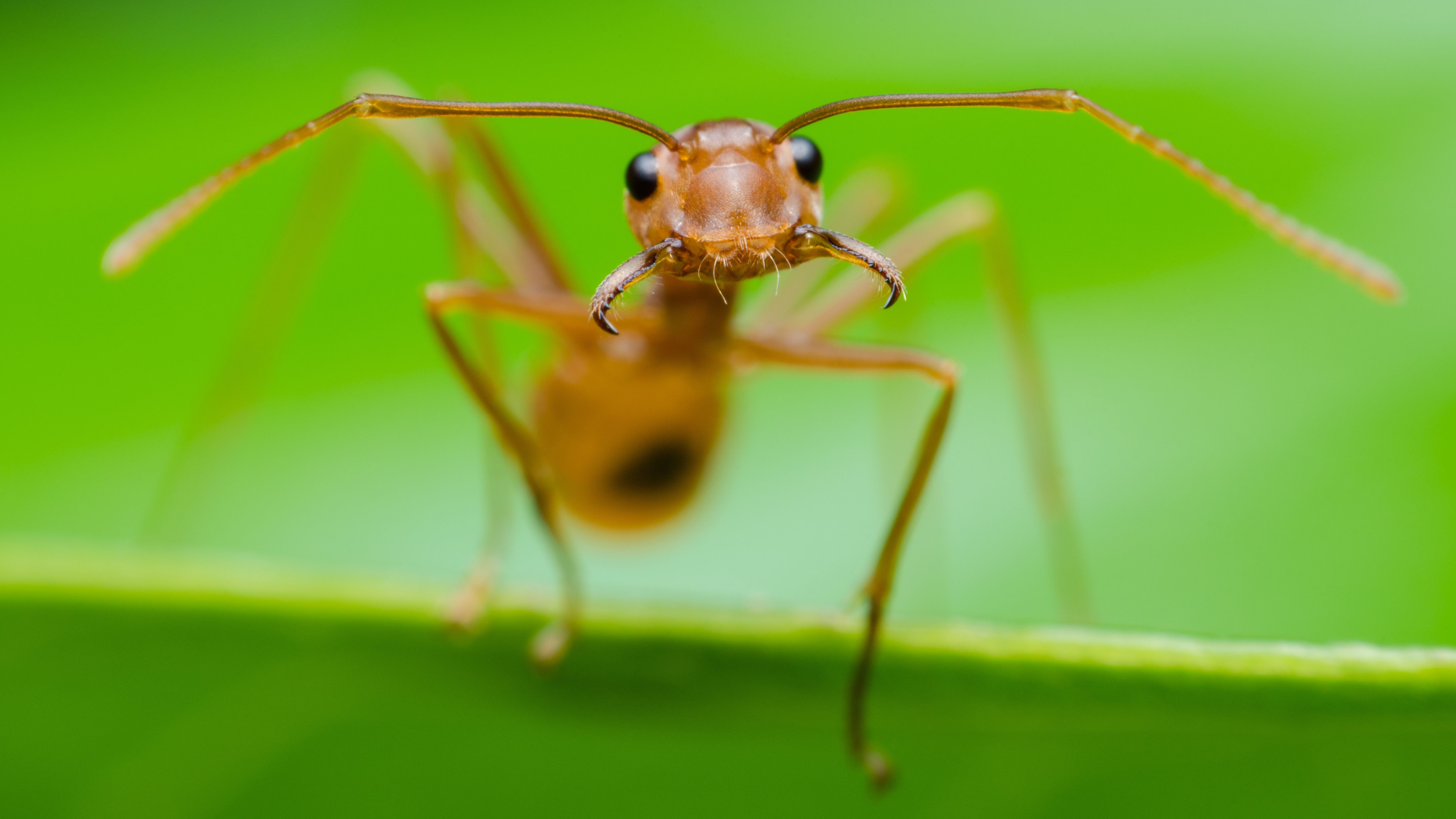 Come liberarsi delle formiche in casa