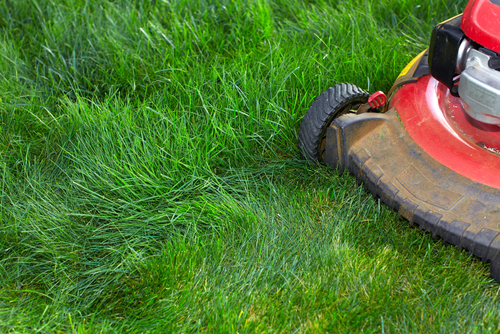 How to mulch with a lawnmower