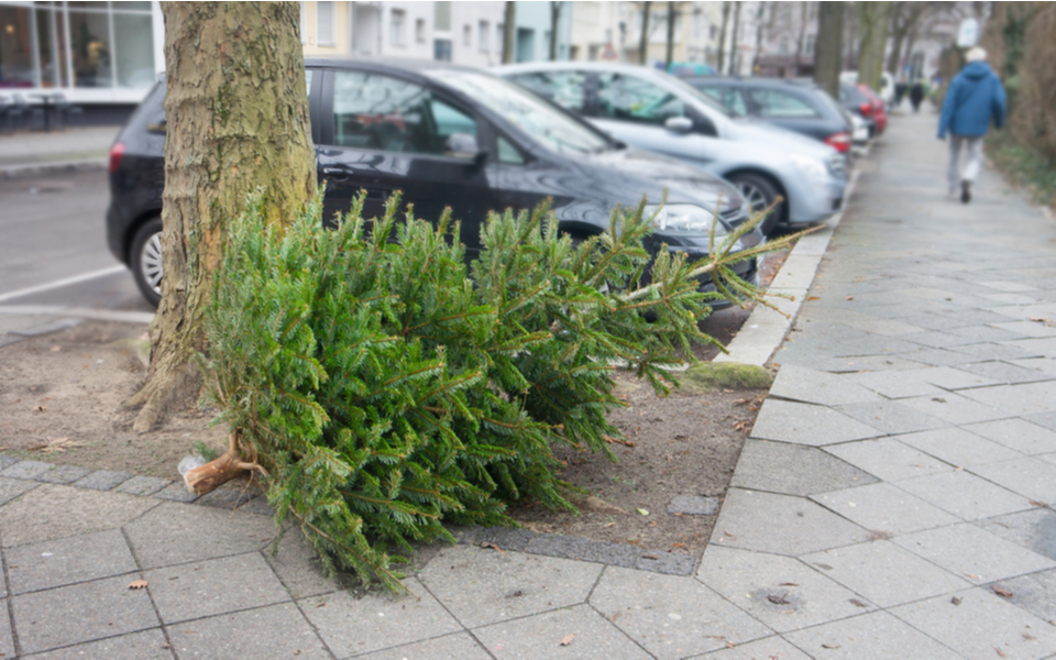 Comment recycler  son sapin de Noël