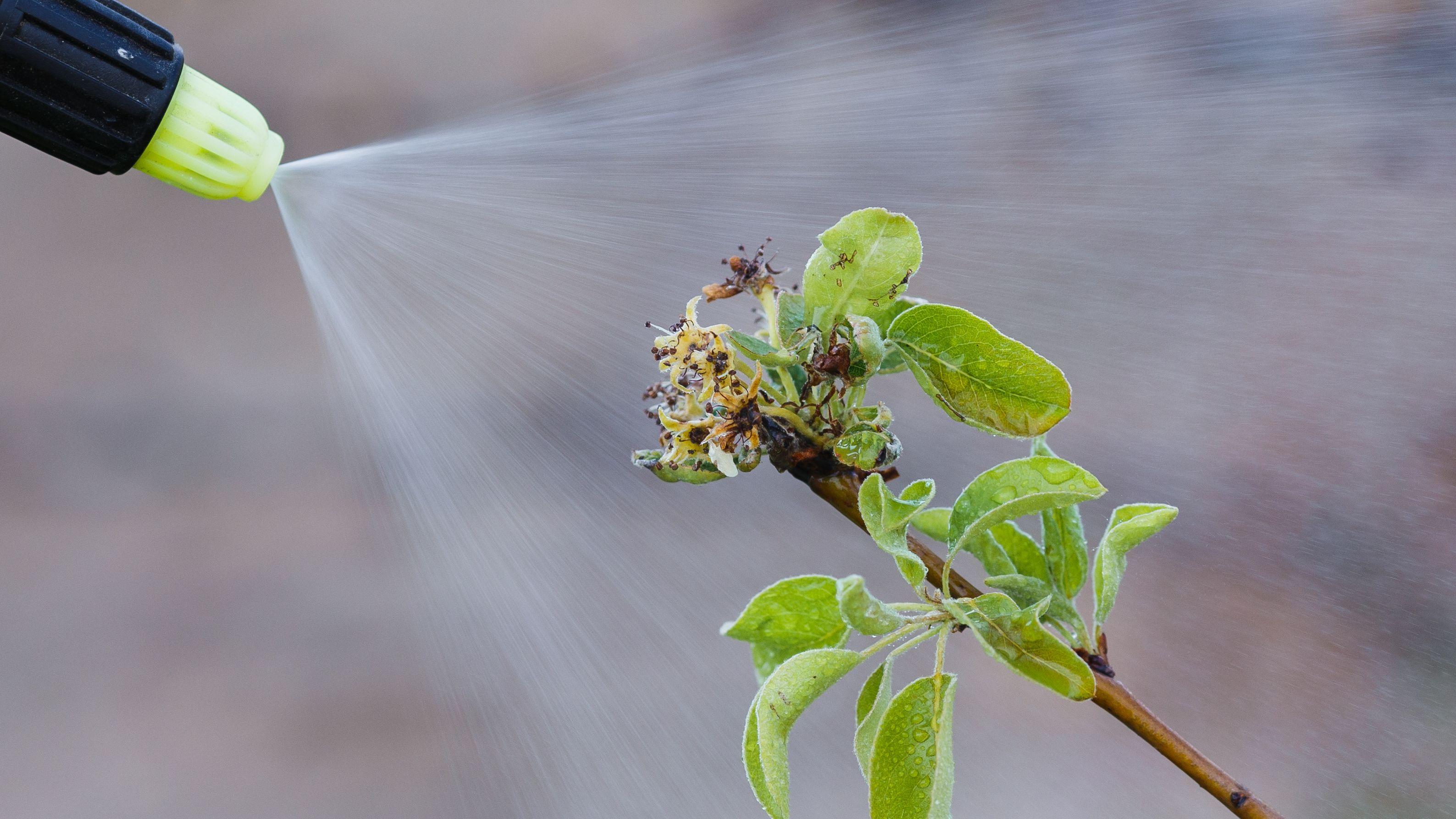 Insecticide et traitement pour plantes : les produits phytosanitaires