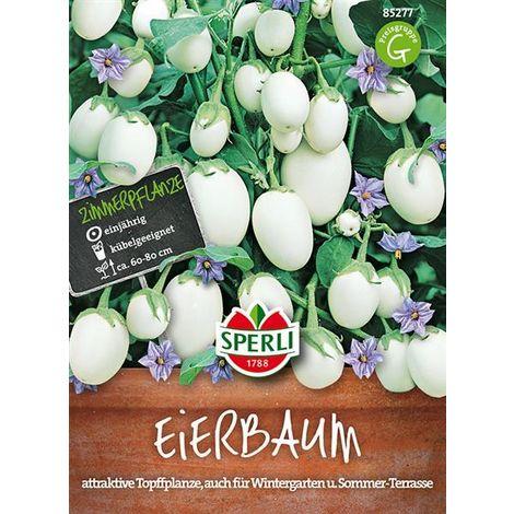 Eierbaum (Solanum) Essbare Früchte