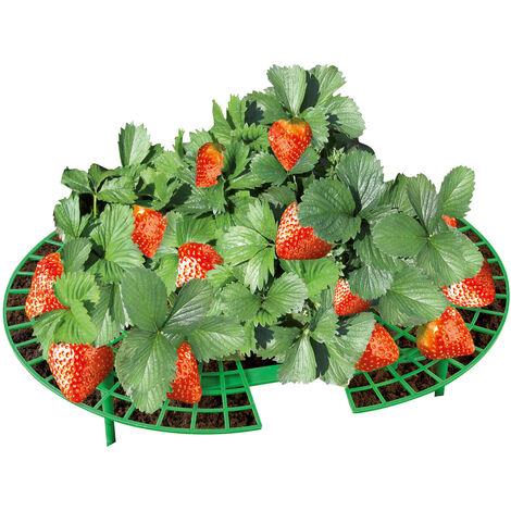 Erdbeer-Reifer, 5er Set