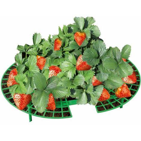 Erdbeer-Reifer, 5er Set WENKO
