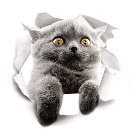 Etiqueta de la pared del gato 3D, etiqueta impermeable del inodoro,XH2007(no se puede enviar a Baleares)