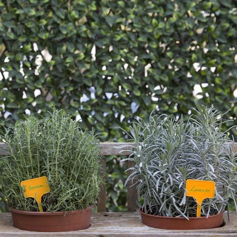 Etiquetas plantación 15cm