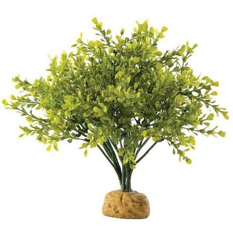 Exoterra pianta boxwood bush
