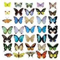 Fensterfolie - Fenstersticker No.51 Schmetterlinge Set II - Fensterbilder Größe HxB: 144cm x 144cm