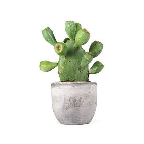 für Cactus Toiletten Cactus Zubehörset 3 oval