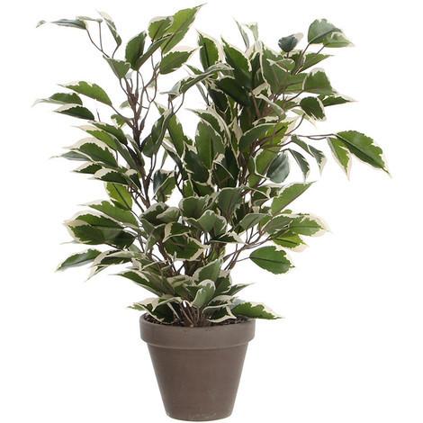 Ficus Natasja Jaspeado Con Maceta 4X11.5Cm - NEOFERR