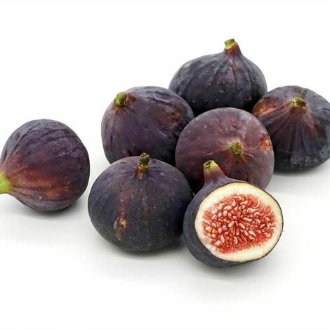 """main image of """"Figuier 'Ronde de Bordeaux' (Ficus Carica 'Ronde de Bordeaux')"""""""