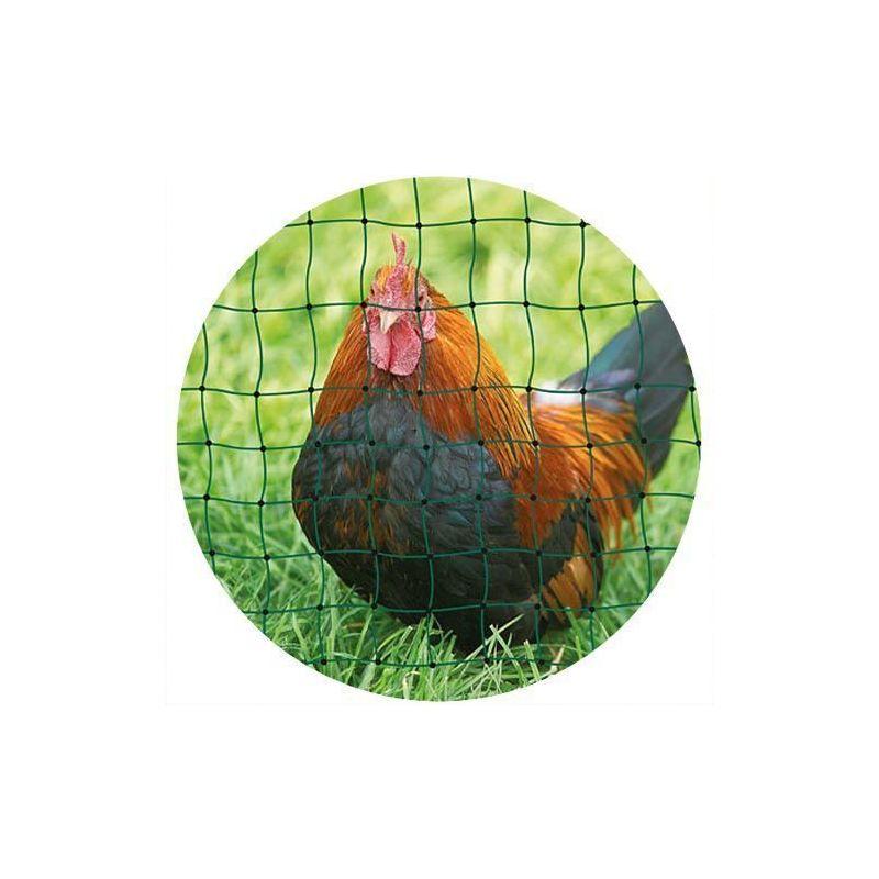 Ako Agrartechnik - Filet à volailles 50m simple pointe 50m - Vert