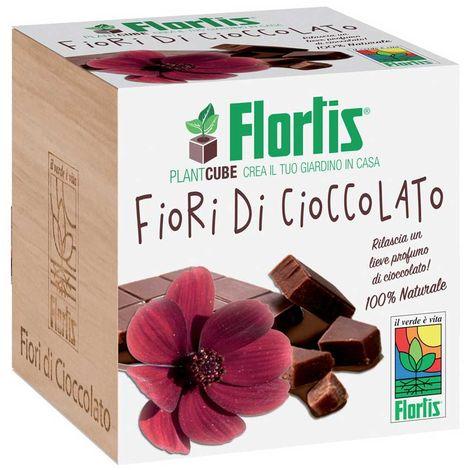 """main image of """"FLORTIS PLANTCUBE FIORI DI CIOCCOLATO 7.5X7.5X7.5 CM GIARDINAGGIO PIANTE FIORI"""""""