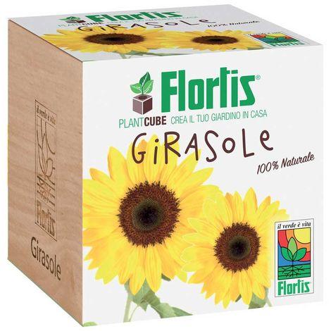 FLORTIS PLANTCUBE GIRASOLE 7.5X7.5X7.5 CM GIARDINAGGIO PIANTE FIORI