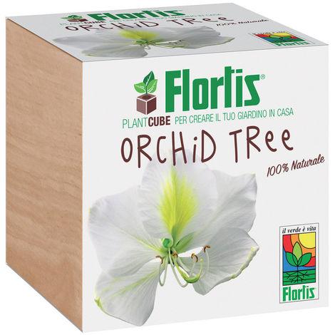 FLORTIS PLANTCUBE ORCHID TREE 7.5X7.5X7.5 CM GIARDINAGGIO PIANTE FIORI
