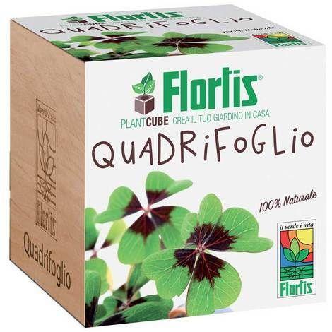 Flortis Plantcube Quadrifoglio 7.5x7.5x7.5 cm