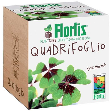 FLORTIS PLANTCUBE QUADRIFOGLIO 7.5X7.5X7.5 CM GIARDINAGGIO PIANTE FIORI