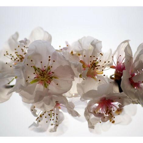 Flowers, rideau imprimé Grandes fleurs blanches et détails 280x245 cm, 2 parts