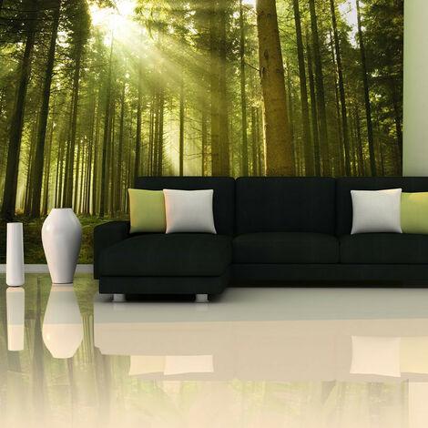 Fotomural - Un bosque de piñas - 450x270