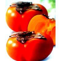 Frutal Kaki Caqui Rojo Brillante. Altura 80 - 100 Cm